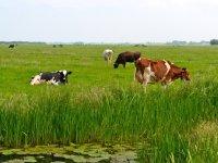 Hoe haalt de melkveehouder op veen 2030?
