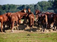 Betere paarden brengen weer geld in het laatje