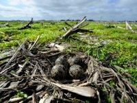 Biodiversiteit Overijssel laat wisselend beeld zien