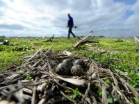 Fries weidevogelseizoen 'heel slecht' van start