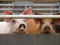 Lichte daling fosfaatproductie varkenshouderij