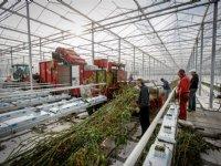 Meer rendement halen uit restproducten tuinbouw