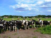'Melkreductieprogramma gaf melkprijs boost'