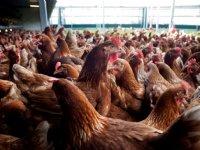 Brabant verlengt innovatiesubsidie met een jaar