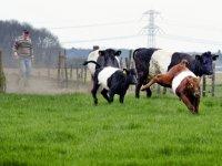 Weer 80.000 euro subsidie voor zeldzame huisdierrassen