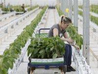 Goed werkgeverschap speerpunt glastuinbouw