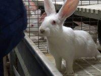 Leerbroekers in actie voor konijnenhouder