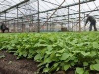 Vernieuwingsslag biologische glastuinbouw