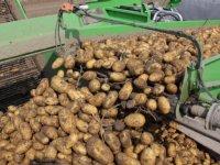 Duitsland en Frankrijk stuwen aardappelexport