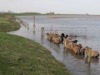 VVD tegen belastingverhoging Hollandse Delta