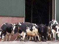 Zonder Kringloopwijzer nog minder vee