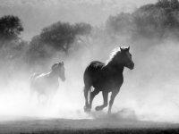Europese uitwerking I&R paardenhouderij zorgenpunt LTO