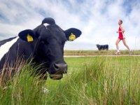 Boeren Schiermonnikoog lopen vast in regels
