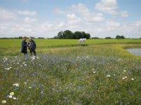Zuid-Holland verdubbelt plasdrasgebieden