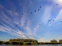 Gemiste schade taxatie ganzenrustgebied zelf melden