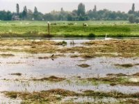 Zuid-Holland wil landbouw voorbereiden op klimaat