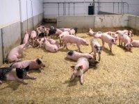 Gedragsverandering aan basis van antibioticareductie