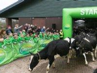 Katja Schuurman laat de koeien naar buiten