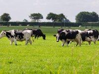 Beperkingen boeren Staphorst weer voorbij