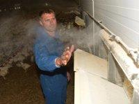Veehouders in de weer met stalkoeling