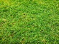 Grasblad bepaalt snelheid hergroei
