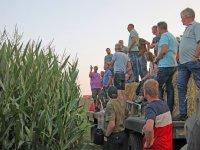 Strokenteelt biedt kans voor mais op veen