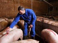 Einde varkensprijsdaling lijkt in zicht