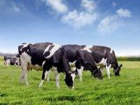 Rassenproef winterkoolzaad goed voor 5,1 ton per hectare