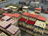 Nederlandse teler vreest slechte kwaliteit Afrikaanse roos
