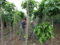 Milieukeur en Groenkeur werken samen bij certificering