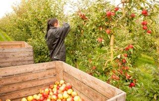 Grootste Europese appeloogst in tien jaar