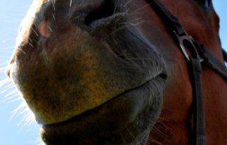 Paard+zoekt+koper%3A+Horse+Dating