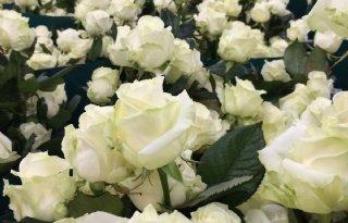 Karren+vol+met+witte+rozen+naar+Amerika