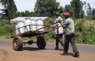 Agrarische kennis kansrijk exportproduct