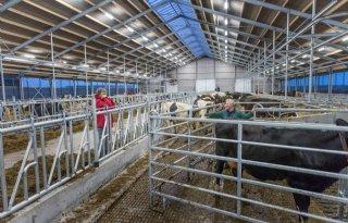 Bevingsbestendiger+stal+koeien+Overschild