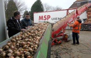 BUI: 1 miljoen ton uien afgeleverd