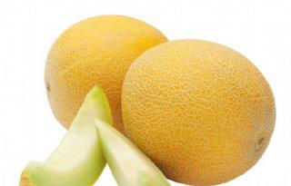 Patent van Monsanto ingetrokken