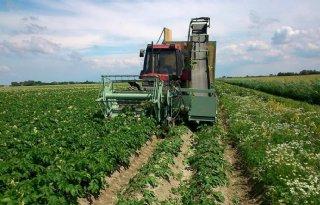 Stoffen aardappelloof bestrijden Erwinia
