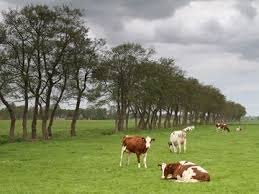 Boeren+Westerkwartier+willen+geen+moeras