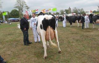 Knoef brengt eerste koe naar 200.000 kilo
