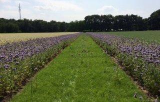 Veel animo voor bijenlinten rond Leiden