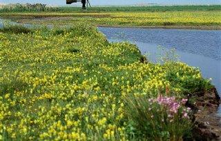 Waddenfonds steunt landschap Texel