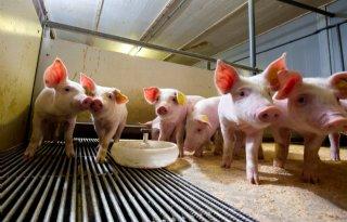 200+miljoen+euro+voor+varkenshouderij