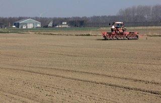 Areaal zaaiuien groeit naar 25.000 hectare