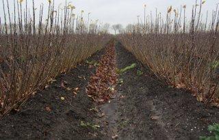 Rusland open voor vruchtbomen