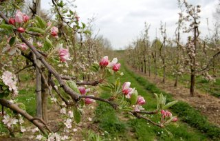 Vrijstelling+Raptol+voor+appels
