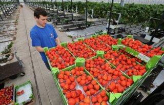 Wel+duurzaam%2C+maar+nog+geen+betere+prijs+voor+groente+en+fruit
