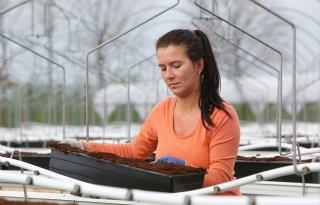 Veenmos uit Finland als substraat voor aardbeien