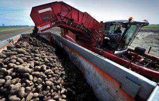 Late aardappeloogst bij Heerenveen
