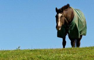 Sectorraad+Paarden+komt+met+weerprotocol